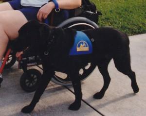 Service Dog at Work