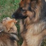 Big dog & little dog