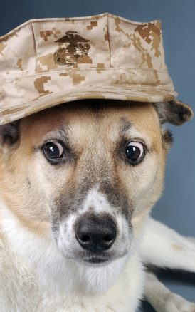 Traveling with Pet Dogs in the Military