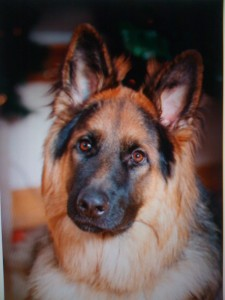 MORGAN - Dr. B's service dog