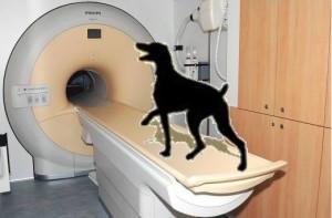 Dog entering MRI