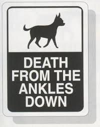 Chihuahua-2 poster