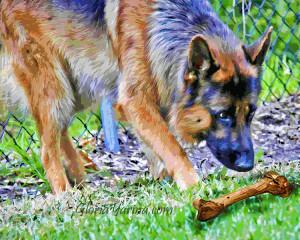 dog and bone sml