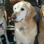 "Ocho, Nemo, & Monroe: ""Dogs on Call"" provide comfort at Oso disaster Photo Credit: Kathy Knox"