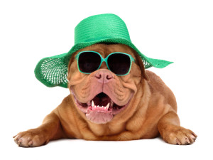 Dog wearing green straw hat and sun glasses