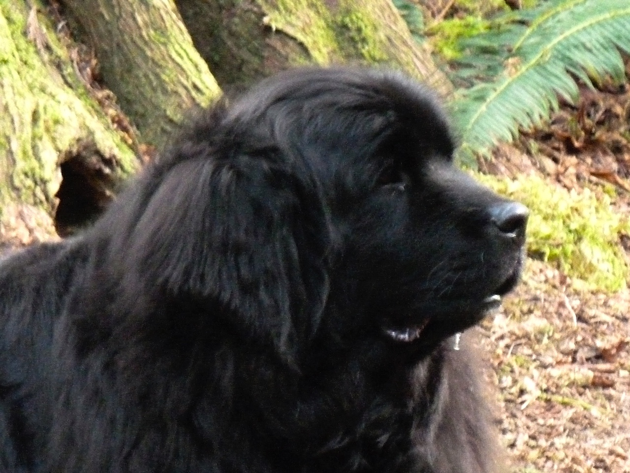 Newfoundland Guide Dog Service