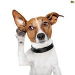 hearing dog-2