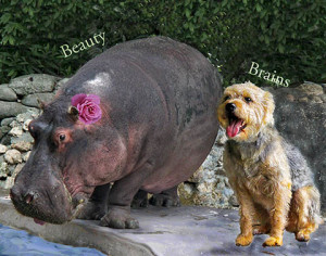Beauty vs Brains -- -- --