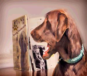 """Dog examines the """"dog-tionary"""" Photo credit: Gloria Yarina"""