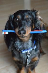 Credit_Kelly McDuff - Dogs Need Fresh Breath Too - Flikr