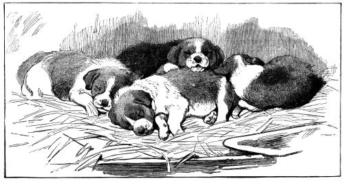 sleeping-puppies