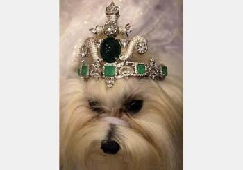 dog-tiara