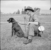 "An explosive detection dog with a member of the British Royal Engineers (France, 1944). Such dogs were used during World War II to find German ""Shoe Mines"", made from wood and otherwise difficult to detect. [Wikipedia]"
