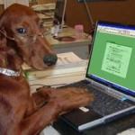 dog typing-2