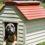 Pet-Sitter for your Home