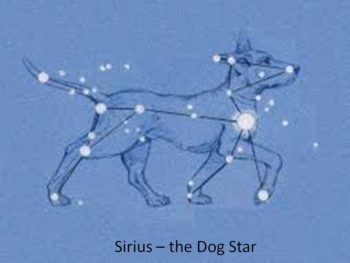 Dog Star