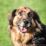 Elsie - Camano Isl Animal Shelter