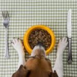 Dog - Place Setting