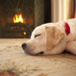 Puppy dog sleeping by fireplace