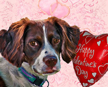 Dog with Valentine Heart